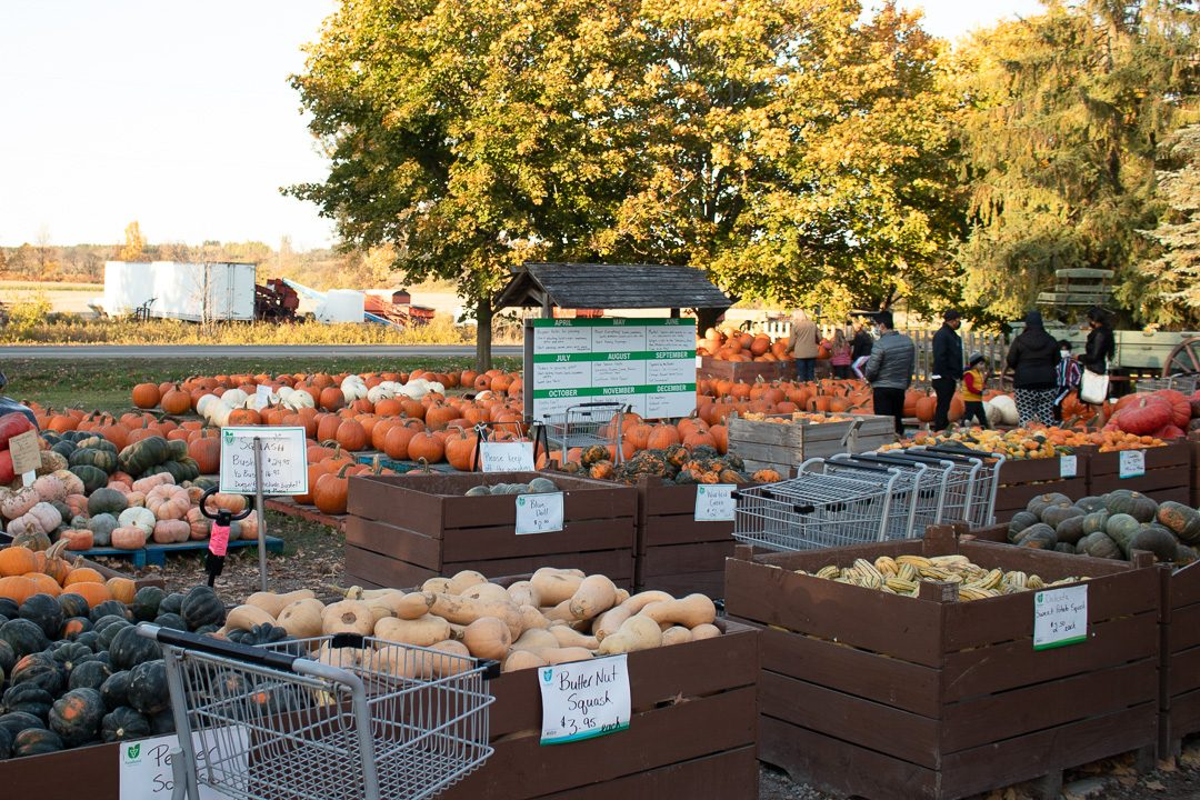 You'll find a variety of pumpkin shapes colour and sizes at Linton's Farm Market in Oshawa.