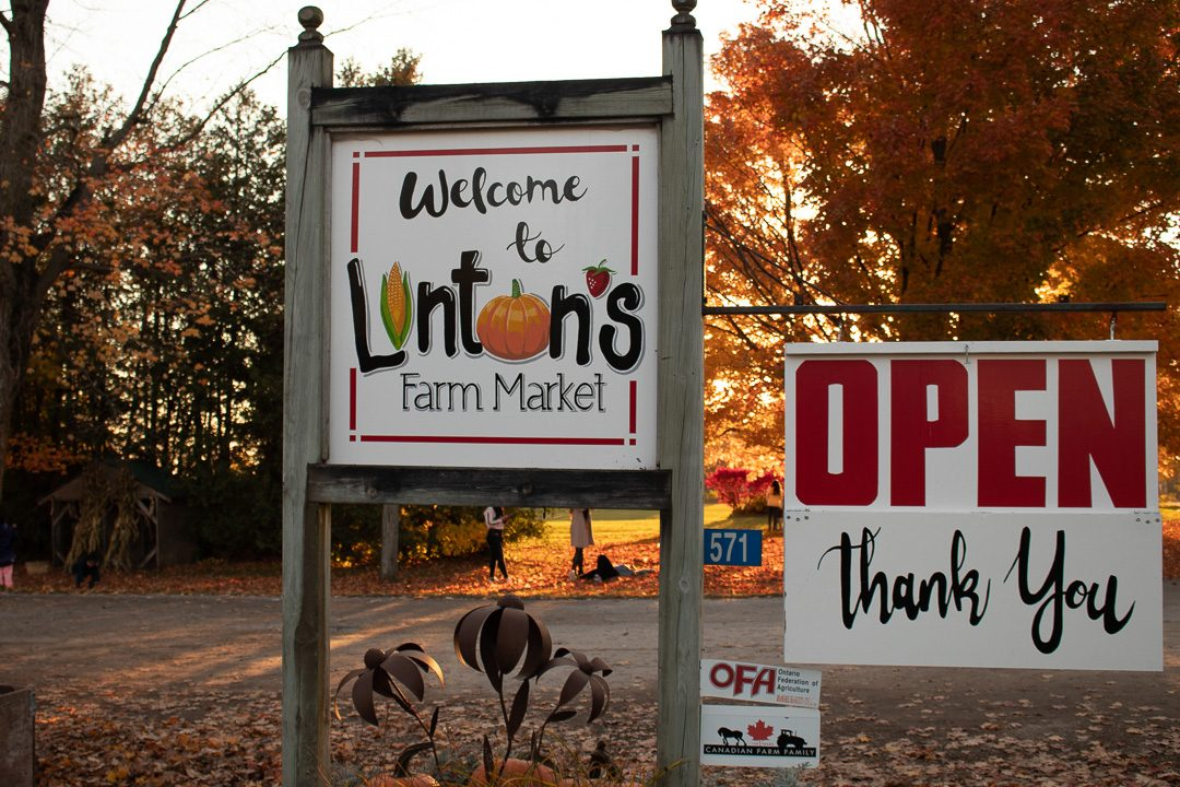 Linton's Farm Market in Oshawa sells all the produce it grows on the farm at its own outdoor market.