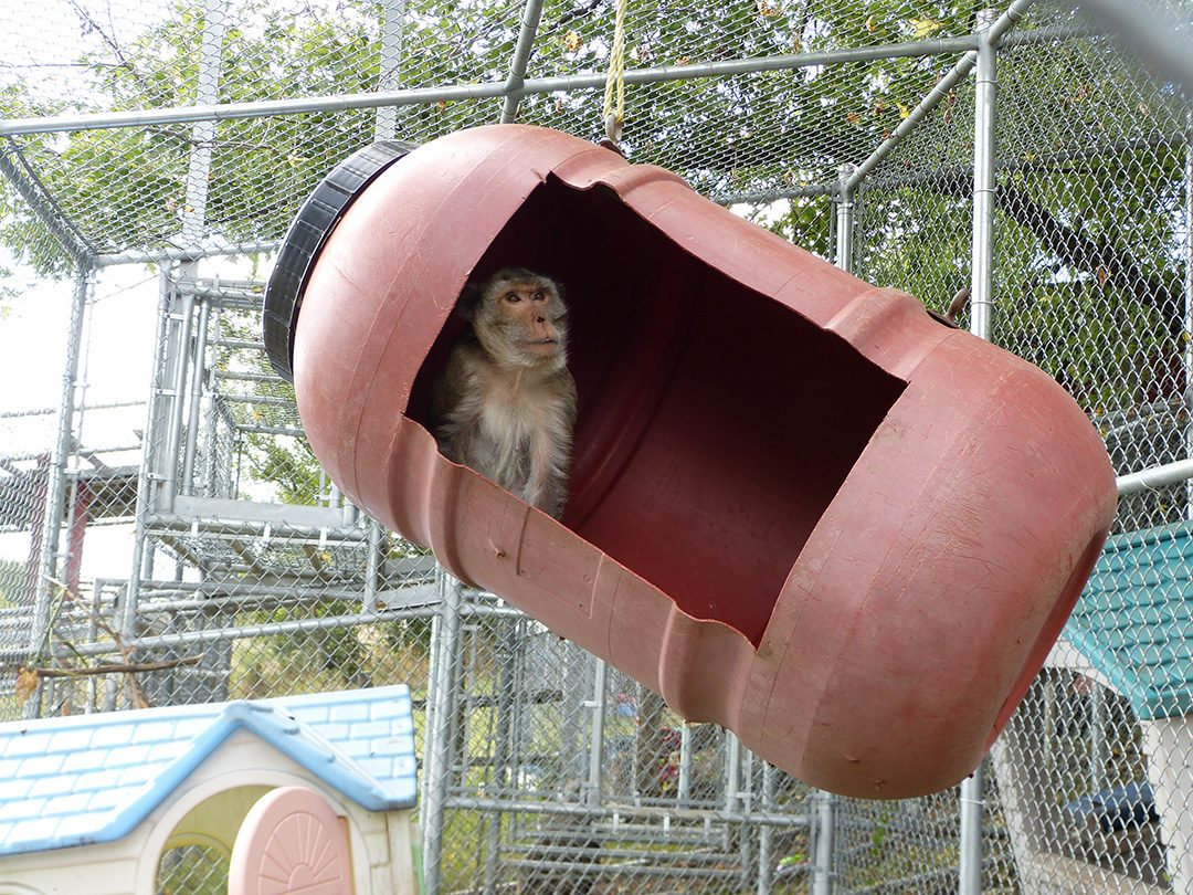 Pugsley was one of the primates released to the farm from a research facility.